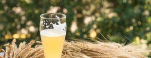 אחת ולתמיד: מה זה בכלל בירה לא מסוננת?