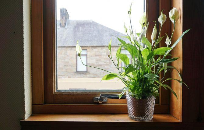 המדריך להתאמת צמחיה לבית